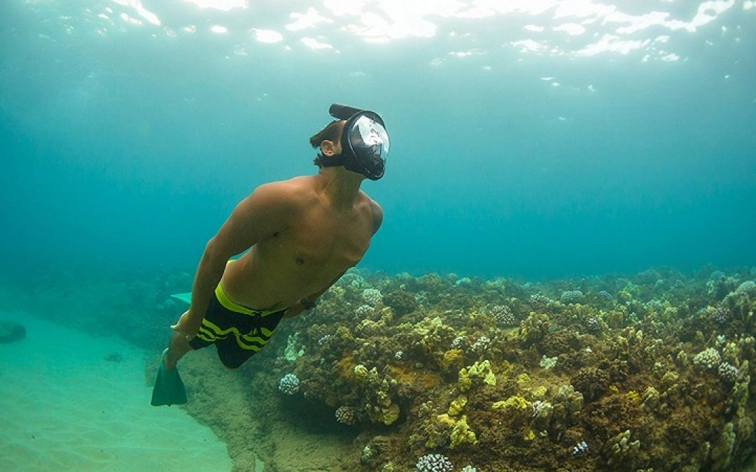 Best Snorkel Masks To View The Most Ocean Life