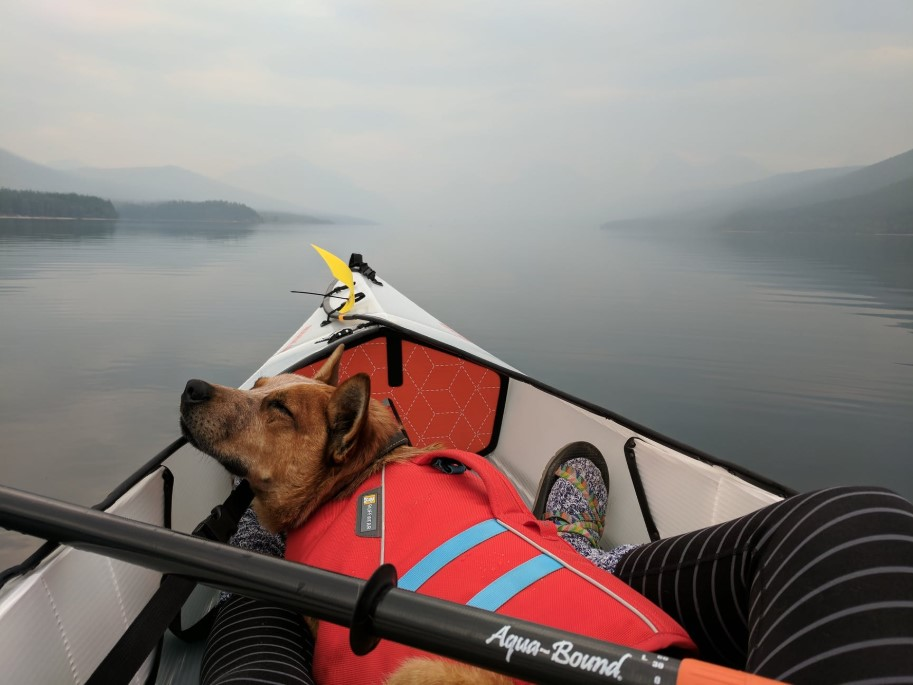 do sleeping in a kayak with owner paddling